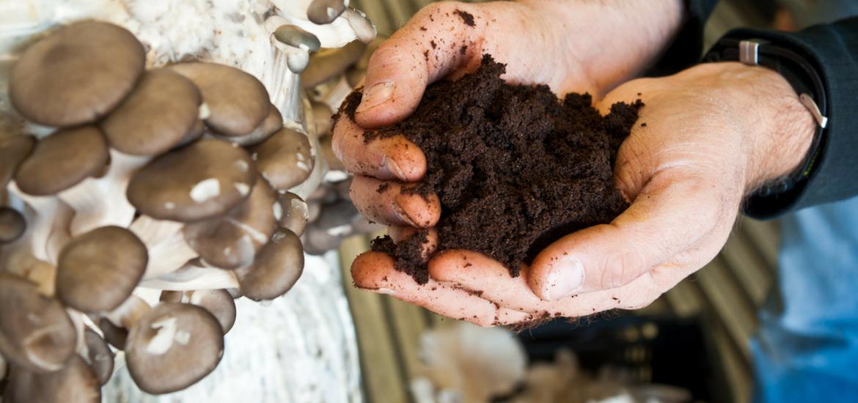 pourquoi faire pousser des pleurotes? - la boite à champignons