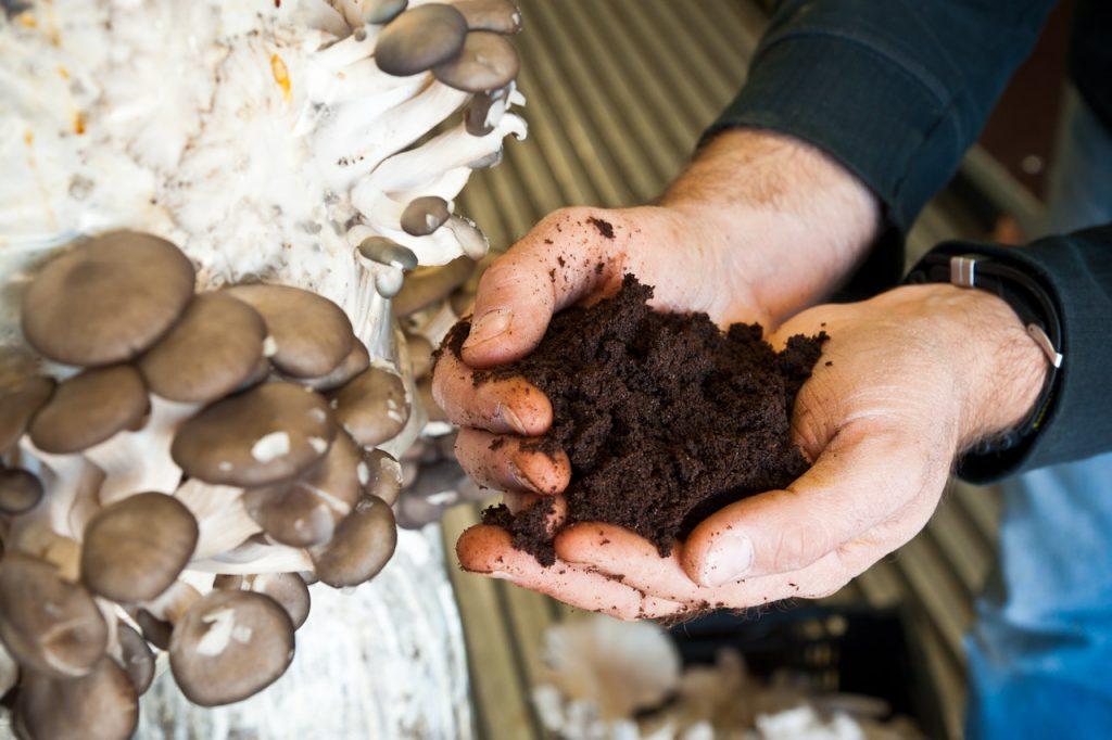 Marc de cafe pour cultiver des champignons dans un container champignonniere, projet U-FARM