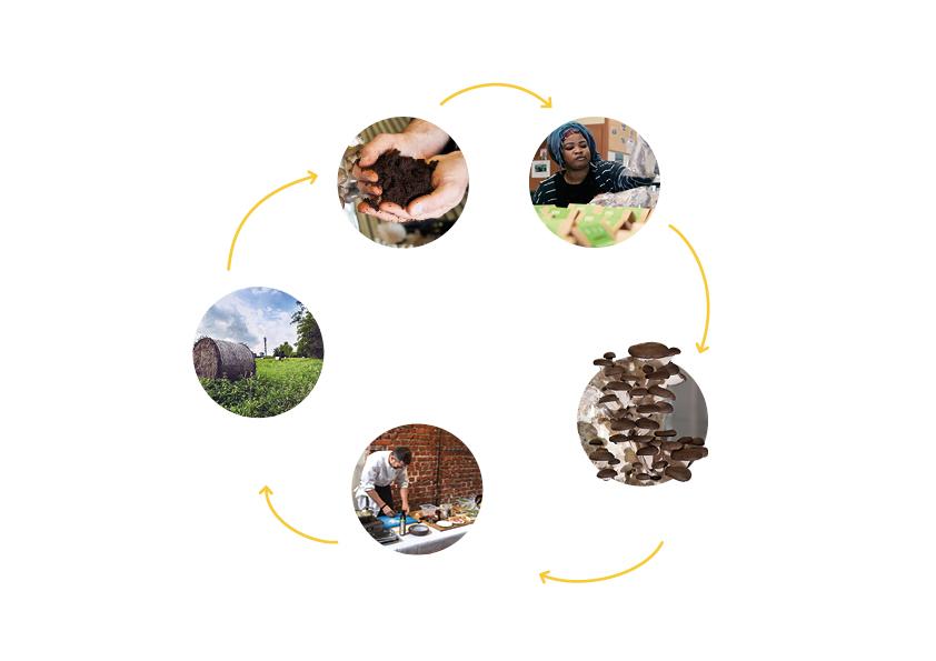 cycle_LBAC Test de la Boîte à Champignons : écologique et solidaire