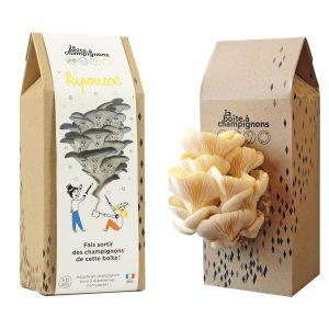 Boite A Champignons - Kipousse enfants - Pleurotes jaunes