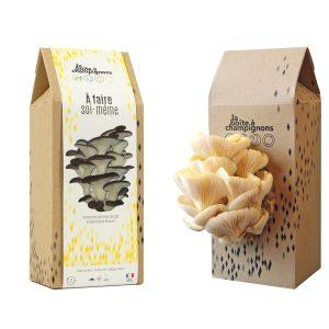 Boite A Champignons - A Faire Soi-Même - Pleurotes jaunes
