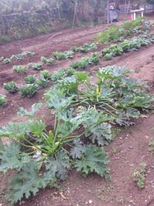 Maraîcher-nutilisant-pas-notre-substrat-225x300