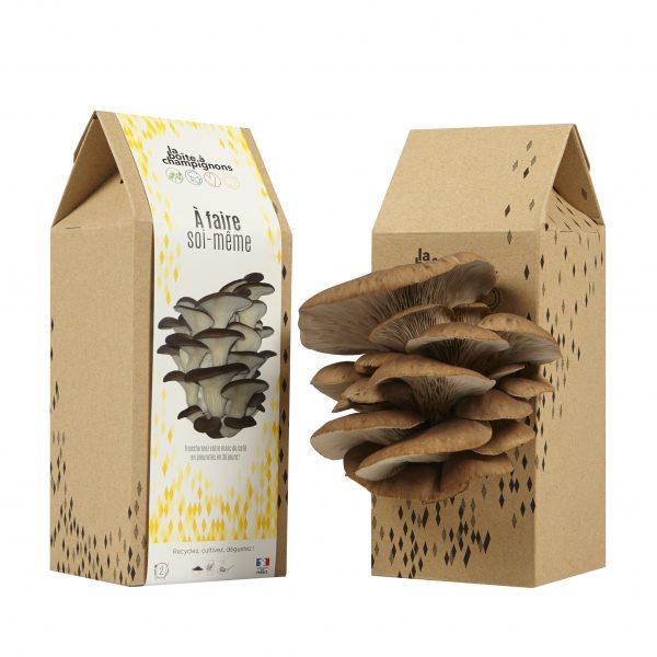 Boîte à Champignons à Faire Soi-Même - pleurotes gris