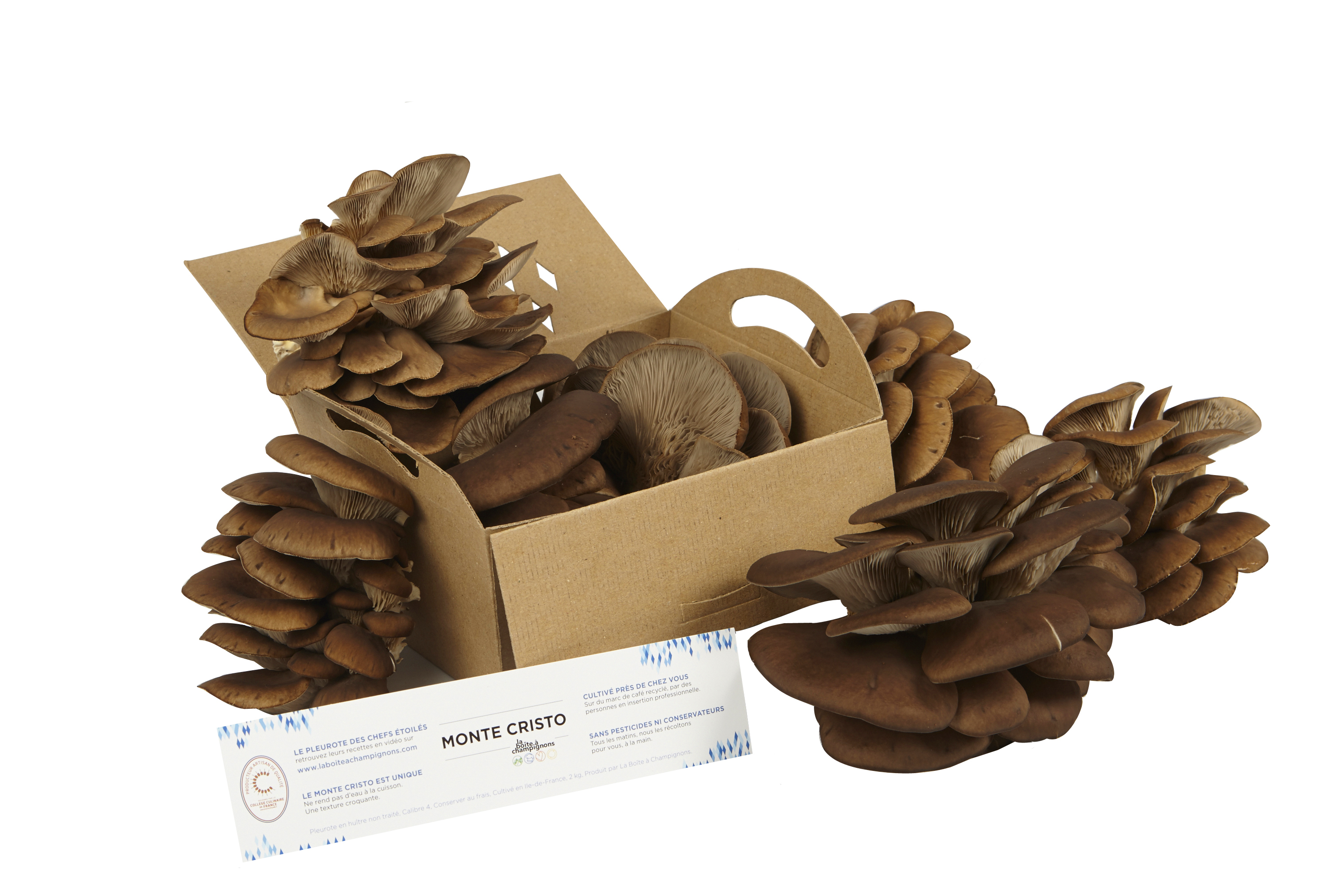 pleurotes monte cristo au marc de caf la bo te champignons. Black Bedroom Furniture Sets. Home Design Ideas