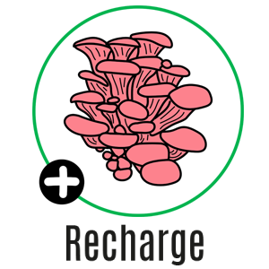 recharge rose